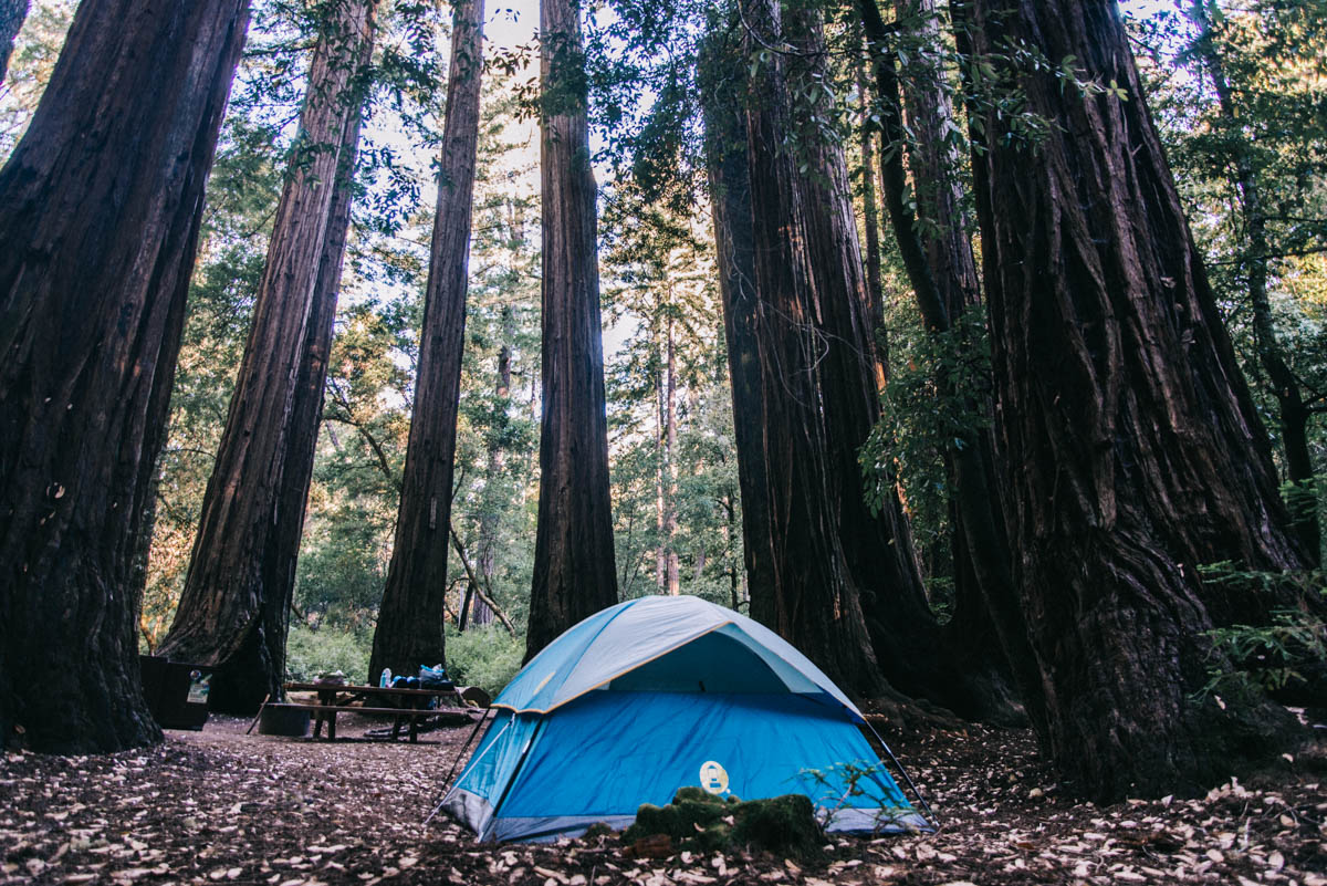 De Coleman tent tussen de sequoias in Big Basin