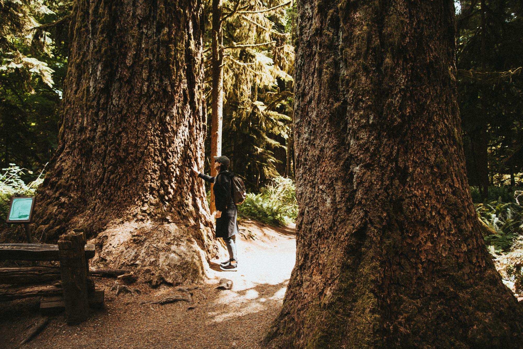 Tussen metershoge bomen op Vancouver Island
