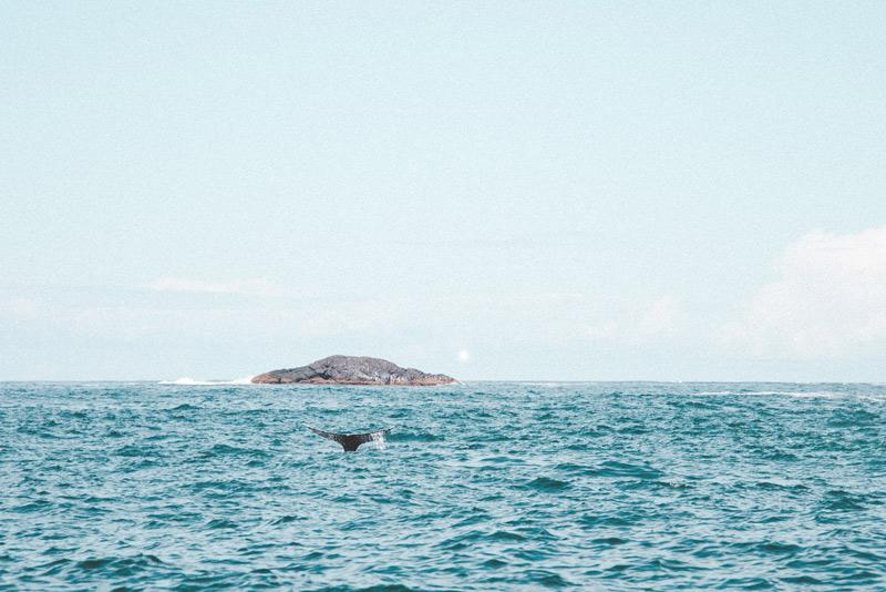 staart van de walvis canada
