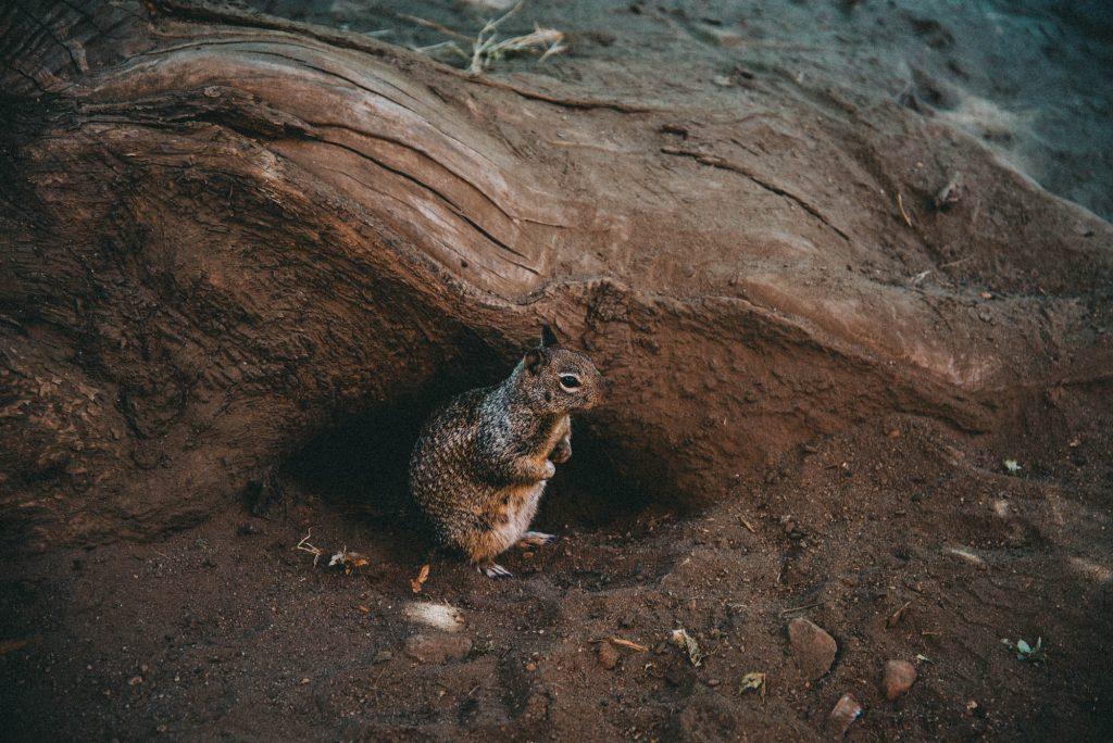 eekhoorn in een boomstam