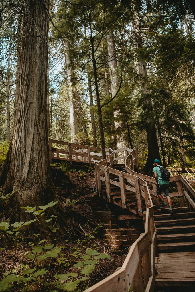 wandeling door Canadees regenwoud