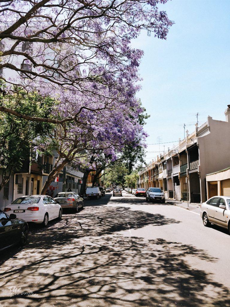 kersenbloemen in een straat in Newtown Sydney